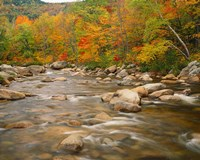 River flowing trough Forest in Autumn, White Mountains National Forest, New Hampshire Fine Art Print