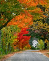 Road lined in fall color, Andover, New England, New Hampshire Fine Art Print