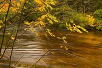 New Hampshire, White Mountain National Forest River Fine Art Print