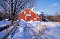 Pony and Barn near the Lamprey River in Winter, New Hampshire Fine Art Print