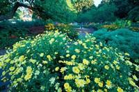 Prescott Park Garden, New Hampshire Fine Art Print
