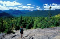 Hiking on Mt Crawford, New Hampshire Fine Art Print