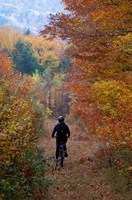 Mountain Biking on Old Logging Road, New Hampshire Fine Art Print