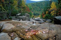 Fall Foliage, Appalachian Trail, White Mountains, New Hampshire Fine Art Print