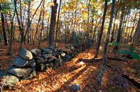 Stone Wall, Nature Conservancy Land Along Crommett Creek, New Hampshire Fine Art Print