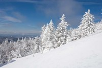 Snowy Trees on the Slopes of Mount Cardigan, Canaan, New Hampshire Fine Art Print