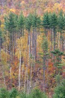White Mountains in Fall, New Hampshire Fine Art Print