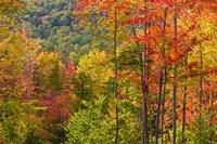 Forest in Grafton, New Hampshire Fine Art Print