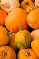 Pumpkins at the Moulton Farm, Meredith, New Hampshire Fine Art Print