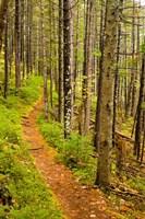 A trail around Ammonoosuc Lake, White Mountain National Forest, New Hampshire Fine Art Print