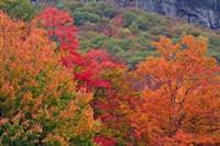 Bemis Falls Trail, Crawford Notch State Park, New Hampshire Fine Art Print