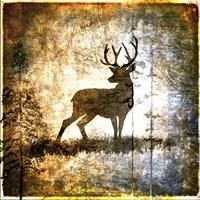 High Country Deer Fine Art Print