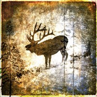 High Country Elk Framed Print