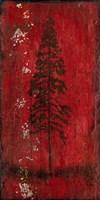 Lodge Pole Pine Fine Art Print