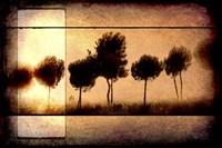 For the Love of Trees I Fine Art Print