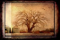 For the Love of Trees IV Fine Art Print