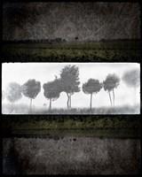 Black Tree 2 Fine Art Print