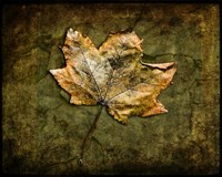 Metallic Leaf 1 Fine Art Print