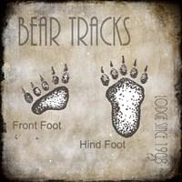 Moose Lodge 2 - Bear Tracks 2 Fine Art Print