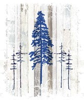The Blue Moose - Lodge Pole Pine Fine Art Print