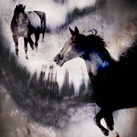 Black Mare - Dream 1 Fine Art Print