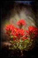 Desert Flower 1 Fine Art Print