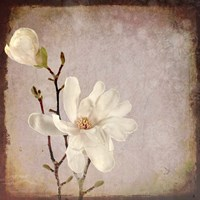 Paper Magnolia Duo Fine Art Print