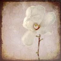 Paper Magnolia Framed Print