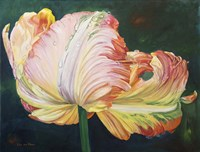 A Flaming Parrot Tulip Fine Art Print