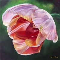 Lit Tulip 2 Fine Art Print