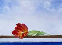 Tulip at Sea Fine Art Print