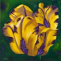 Yellow Virus Tulip Fine Art Print