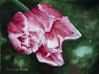 Columbus Tulip Fine Art Print