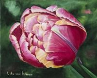 Mama Mia Tulip Fine Art Print