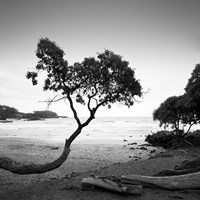 Koki Beach Fine Art Print