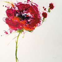 Poppy Master on White Fine Art Print