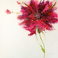 Pink Daisy on White Fine Art Print