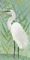 Egret by the Shore II Fine Art Print