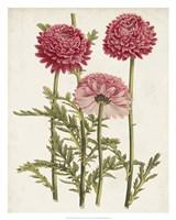 Vintage Garden Beauties I Fine Art Print