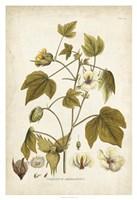 Elegant Botanical I Fine Art Print