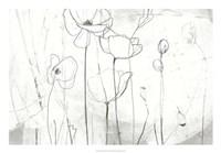 Poppy Sketches I Fine Art Print