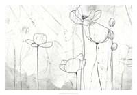 Poppy Sketches II Fine Art Print