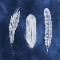 Cyanotype Feathers I Fine Art Print
