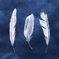 Cyanotype Feathers II Fine Art Print