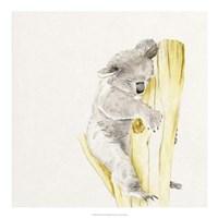 Baby Koala I Fine Art Print