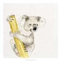 Baby Koala II Fine Art Print