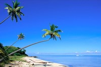 Beach, Malololailai, Mamanuca Group, Fiji Fine Art Print