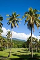 Golf course, Taveuni Estates, Taveuni, Fiji Fine Art Print