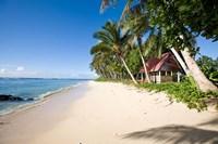 Palm Trees at Lavena Beach, Taveuni, Fiji Fine Art Print