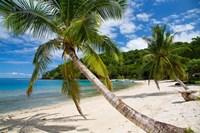 Beach and Palms, Waitatavi Bay, Vanua Levu, Fiji Fine Art Print